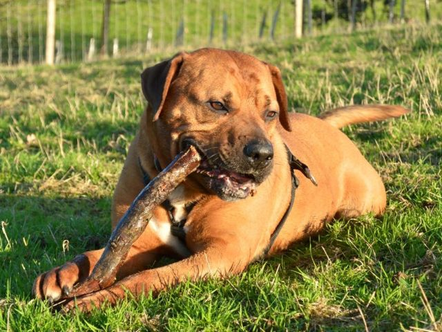 Robbie (REHOMED)