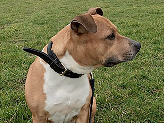 Polly (REHOMED)
