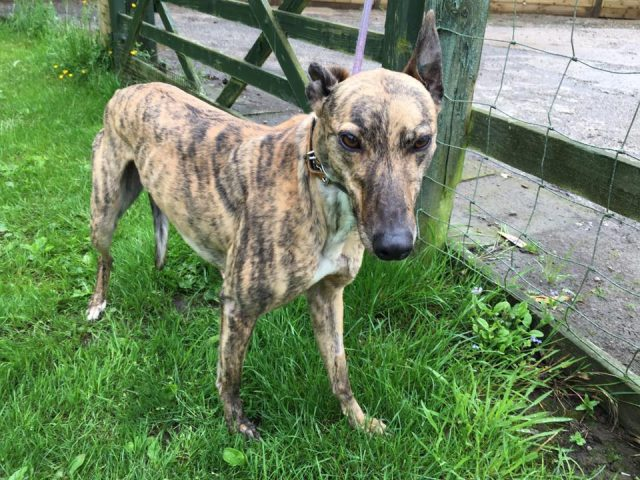 Wendy (REHOMED)