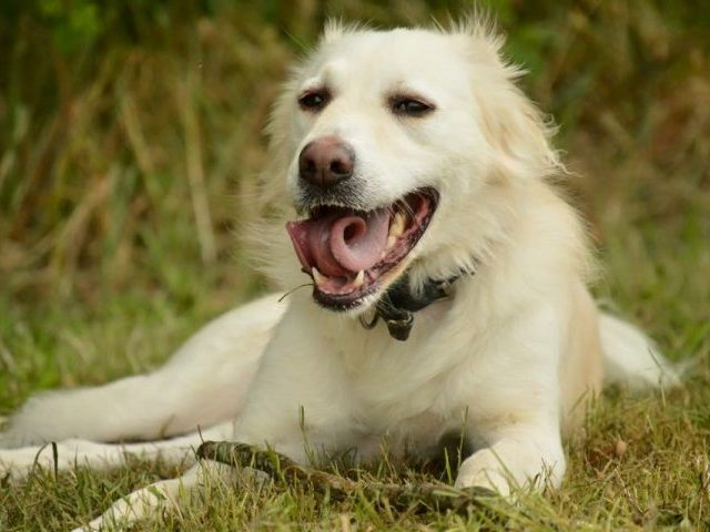 Billy - Just For Dogs Rescue