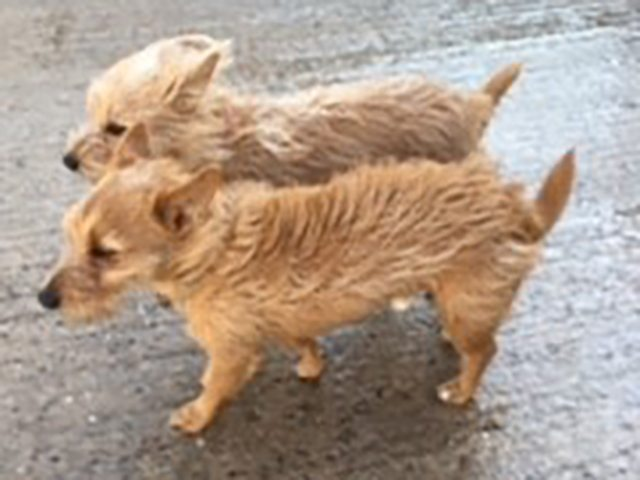 Archie & Charlie (REHOMED)
