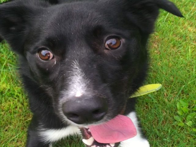 Max (REHOMED)