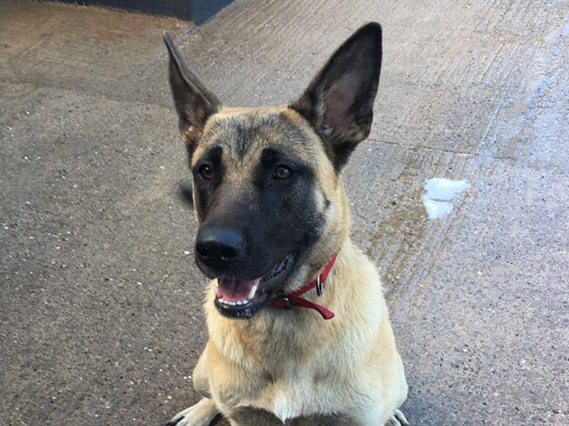 Jess (Rehomed)