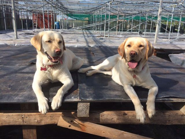 Lilly and Ava (REHOMED)