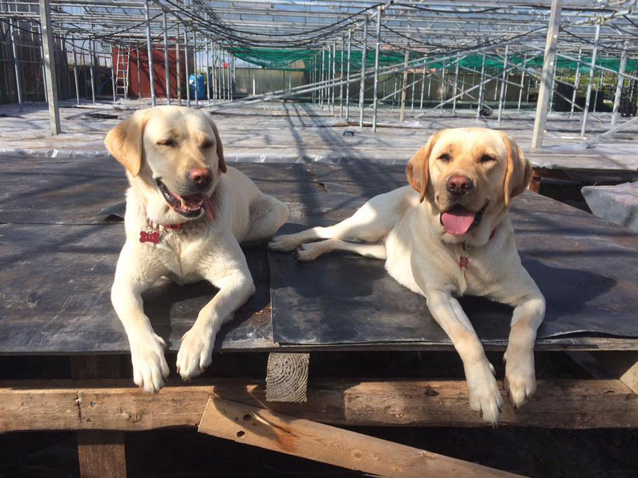 Lilly & Ava