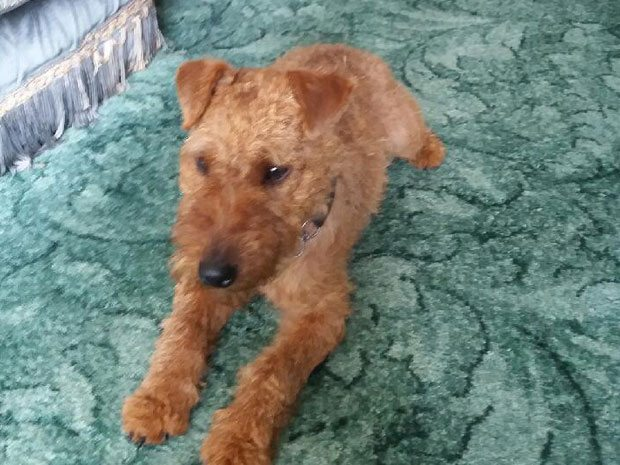 Digger (REHOMED)
