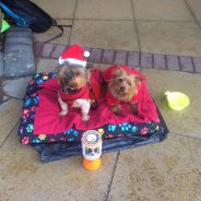 Pre-Christmas Collection at Ashbourne Sainsbury's Raises a Staggering £709.16 for JFD!