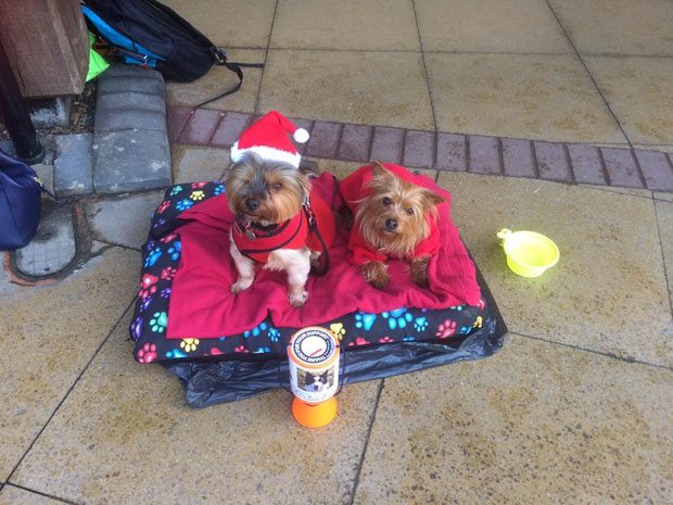 Sainsbury's Christmas Fundraising - Just For Dogs Rescue