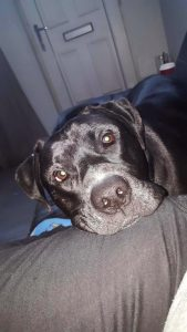 Give Xander a Loving Home - Just For Dogs Rescue