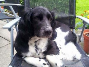 Give Dillon a Loving Home - Just For Dogs Rescue