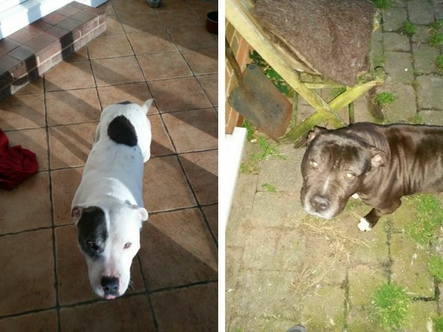 Give Marco & Nemo a Loving Home