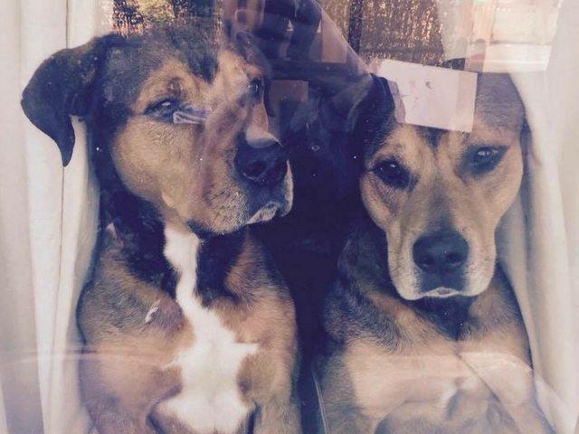 Mylo & Tyson