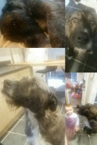 Give Frankie a Loving Home - Just For Dogs Rescue