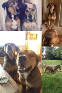Give Mylo & Tyson a Loving Home - Just For Dogs Rescue