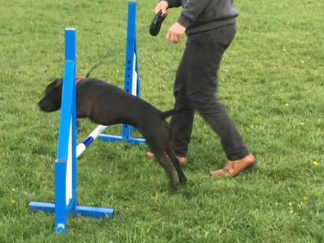 Agility is well under way at JFD