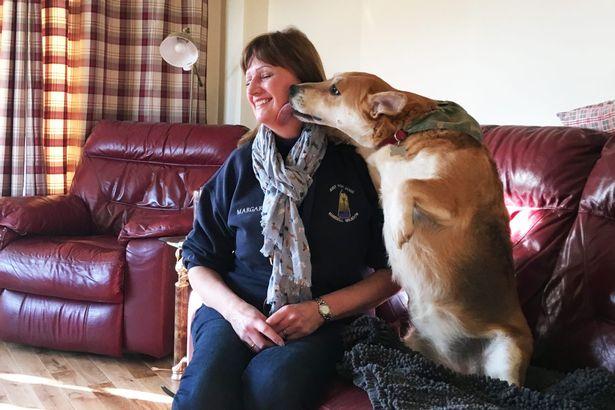 Ashbourne Dog Rescue