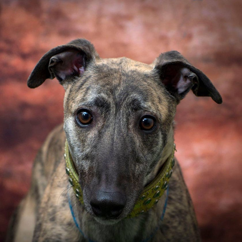 Blaze - REHOMED - Just for Dogs Derby Dog Rescue