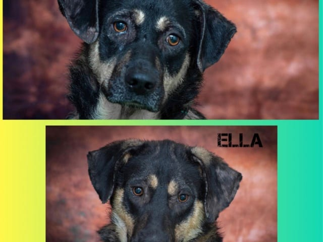 Bella & Ella – REHOMED