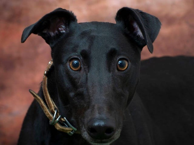 Lad – REHOMED