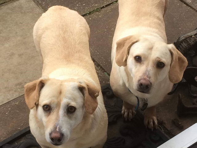 Blossom and Buttercup – RESERVED