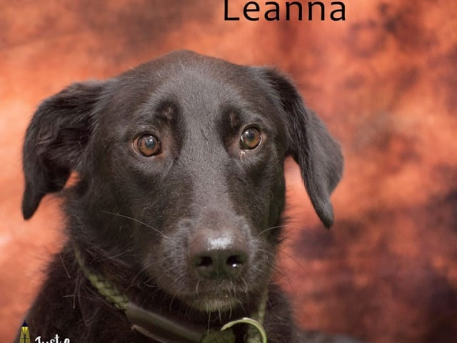 Leanna – REHOMED