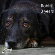 Robin – RESERVED