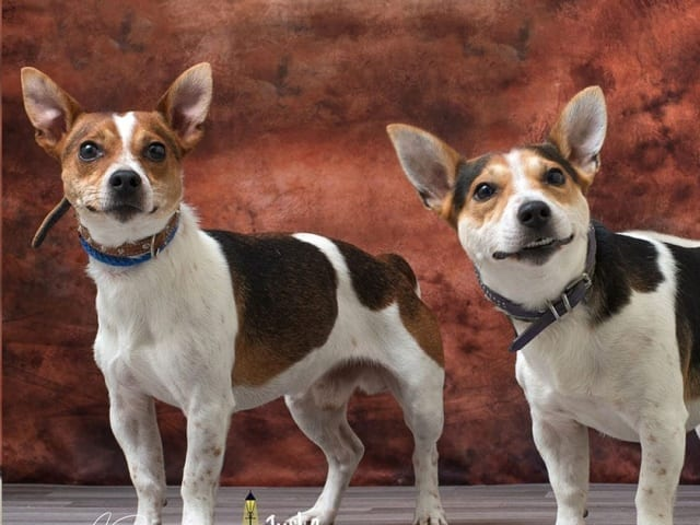 Alfie and Milo – REHOMED